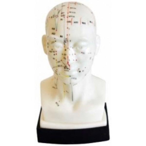 Levně Akupunkturní model - hlava 21 cm